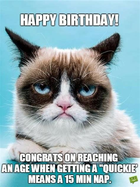 Sarcastic Cat Meme - sarcastic birthday wishes funny messages for those