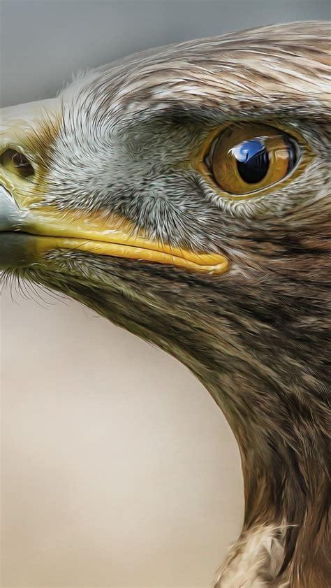 wallpaper for iphone 5 eagle 640x1136 eagle macro predator bird iphone 5 wallpaper