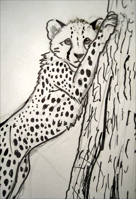 sketchbook cheetah cheetah sketch 2 by jezarae on deviantart