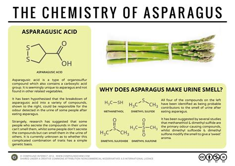 why does a your why does your smell after asparagus infographic distillery trail