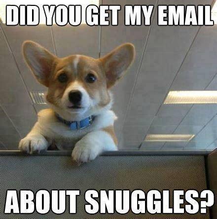 Corgi Birthday Meme - corgi pug memes google seawch funny pinterest