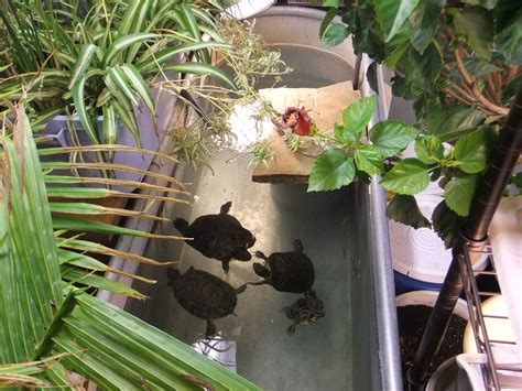 turtle ponds for backyard an indoor turtle pond turtle pond turtle and pond
