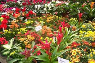 Plants And Flowers gallery for gt tropical plants and flowers