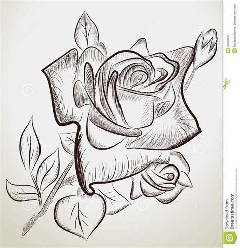 imagenes de rosas dibujadas con lapiz rosas dibujadas mano foto de archivo libre de regal 237 as