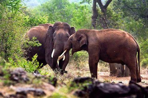researchers develop ai  identify describe wild animals  news minute