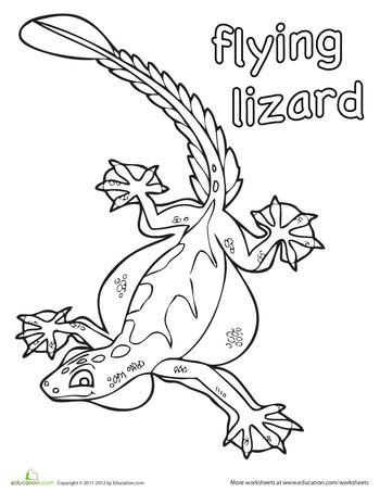 draco lizard coloring pages color the flying lizard lizards and worksheets