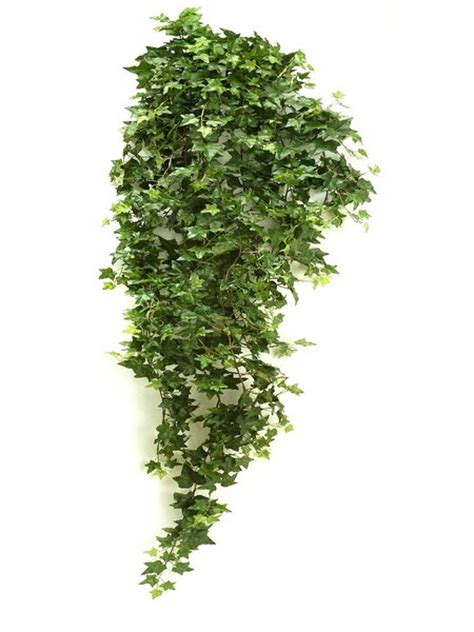 seidenpflanze hedera h 228 ngende pflanze gr 252 n 125mm - Hängende Pflanzen