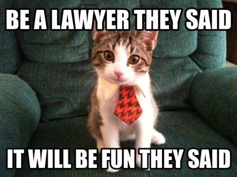 Lawyer Cat Meme - it s official city lawyers hate their jobs legal cheek