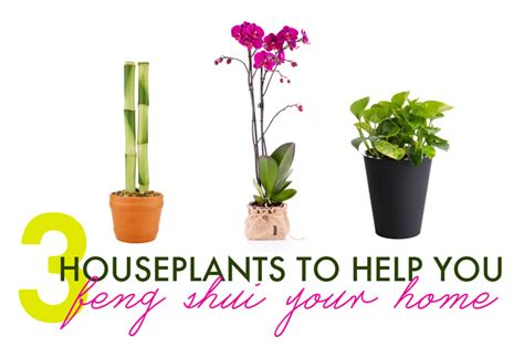 what is the feng shui of plants in the bedroom 3 houseplants to help you feng shui your home 3 feng shui