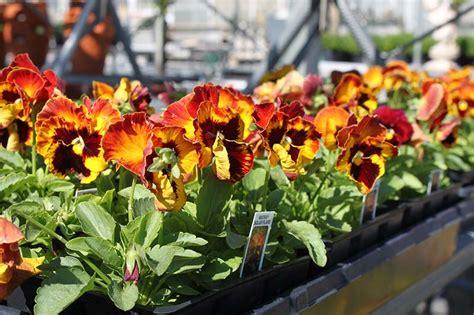 summer gardening summer gardening dayton garden center