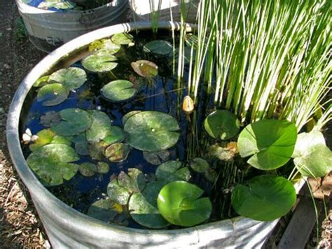 small water gardens in containers creative container gardens