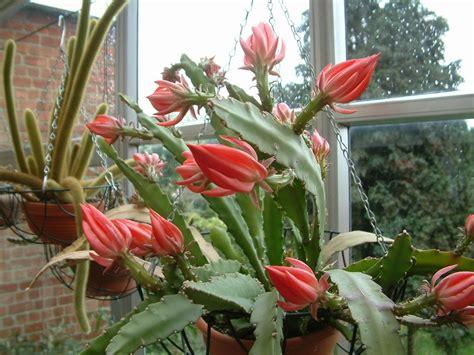 santa fiore pianta piante grasse con fiori piante grasse