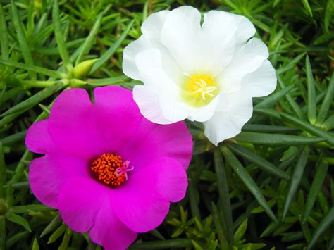 fotos gratis petalo natural asia botanica