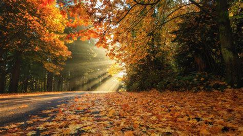 fall leaves  road  forest  sunbeam hd nature