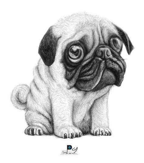 drawings of pugs 25 best ideas about pug illustration on pug pug and pug