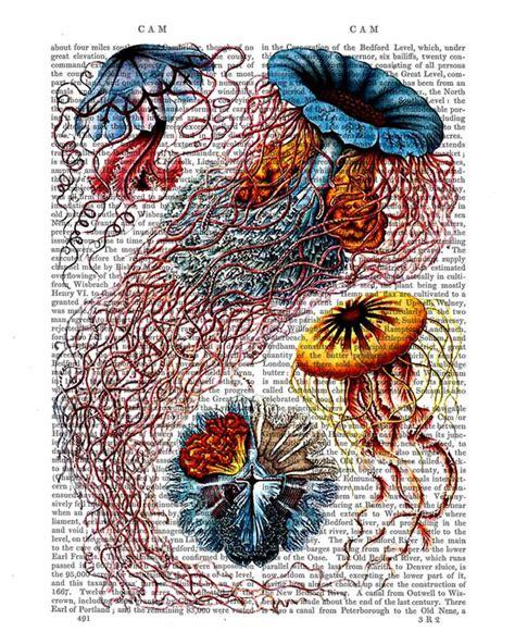 anemone dictionary 51 best john d batten images on pinterest batten