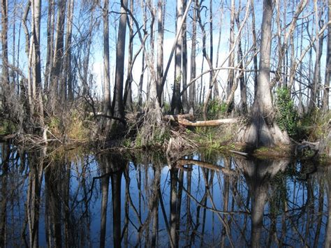 airboat sw tours near new orleans tour the louisiana sws at airboat adventures airboat