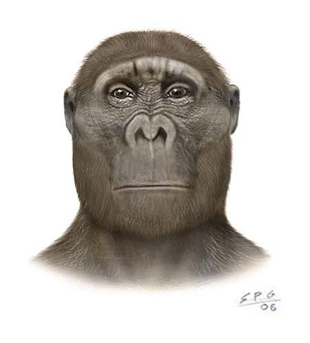 africanus el hijo del el profesor bigotini australopithecus africanus otro paso adelante