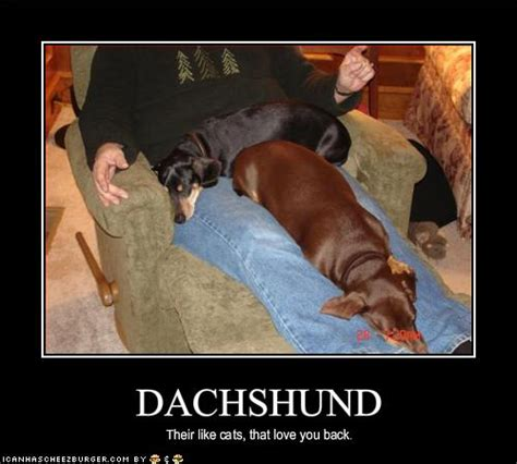 Wiener Dog Meme - 15 funny dachshund photos