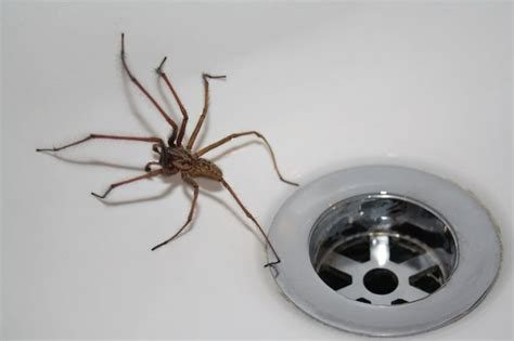 how to get rid of spiders in the house how to get rid of spiders