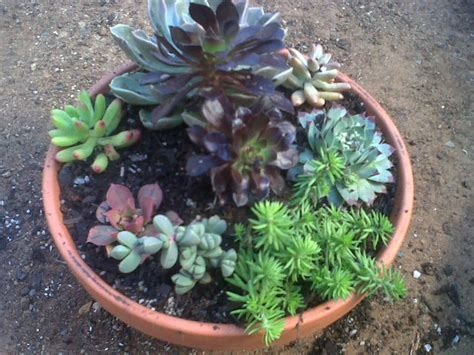 how to plant your own succulent bowl world of succulents