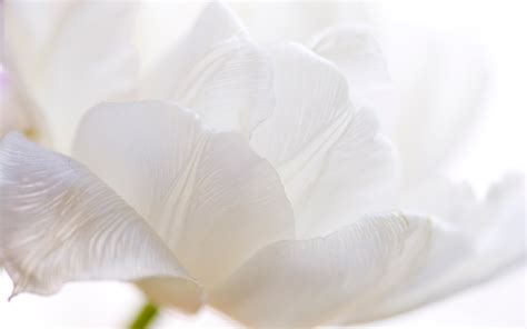 white flower images white flower hd wallpapers