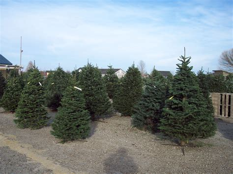 28 best christmas tree farm happy valley pictures on