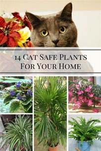 house plants safe for cats 14 cat safe plants for your home home and gardening ideas