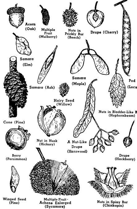 Tree Anatomy - Natureglo's eScience Botany Virtual Libary