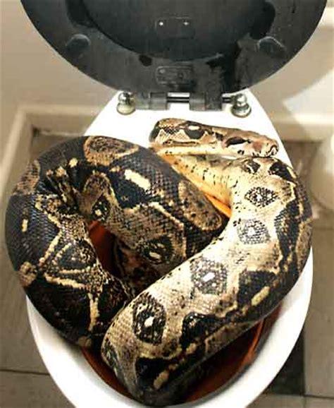 owner of dixie toilet dixie pythons and boas