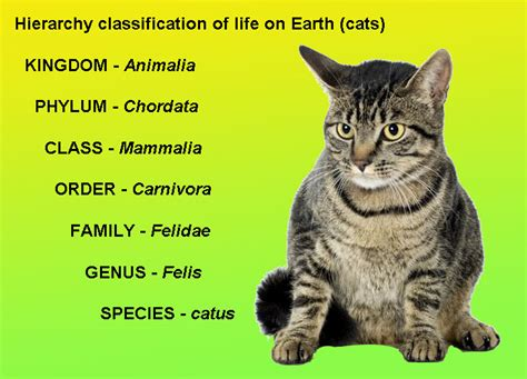 Scientific Name For House Cat by Geology Cafe