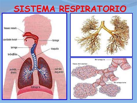 descargar molde aparato respiratorio descargar molde