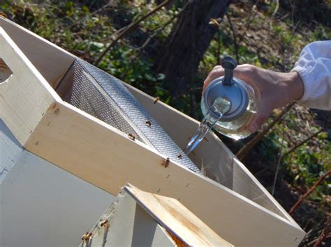 top bar hives in cold climates thy hand hath provided honey bee packages