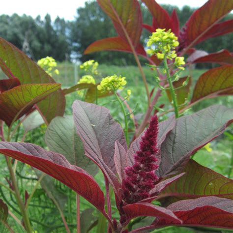 orto e giardino biologico giardinaggio biologico link orto giardino plantula
