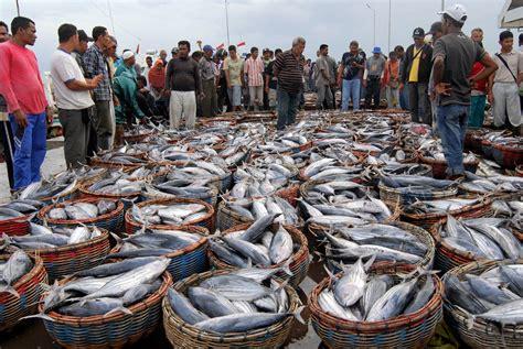 Ikan Keranjang Bali proses pelelangan ikan di terminal pelabuhan ikan lulo