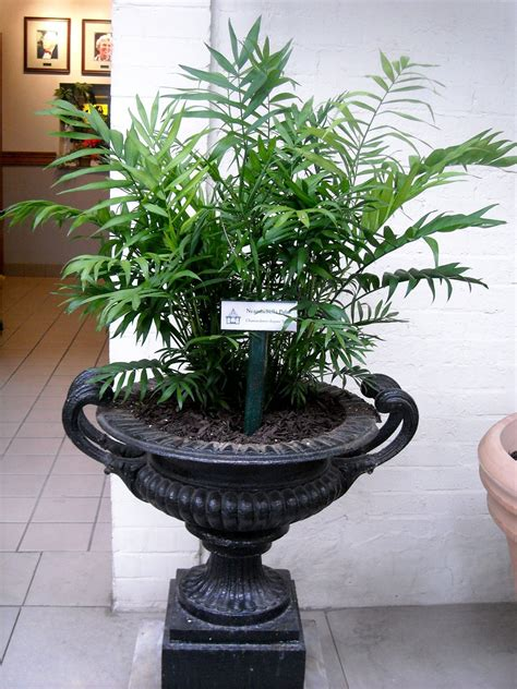 tall indoor plants low light facts about low light house plants plants in nanopics
