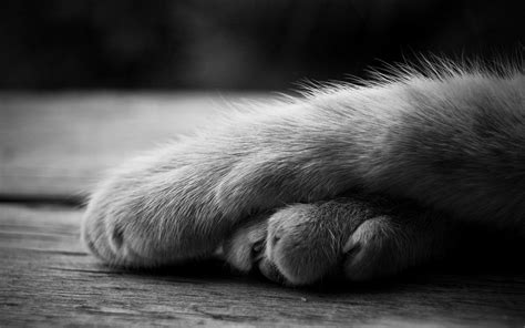 wallpaper cat paw cat paws wallpaper 45075 2560x1600 px hdwallsource com