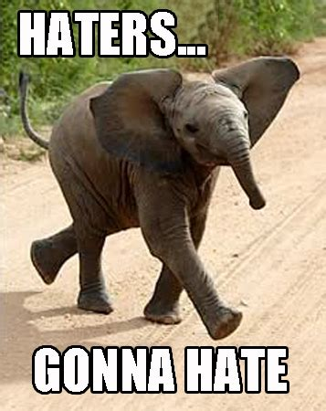 Elephant Meme - haters gonna hate elephant images graphics comments and