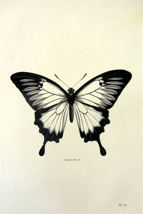 tattoo butterfly vintage 1860 antique ulysses butterfly print vintage by