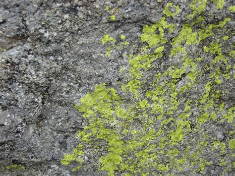 rock with moss texture 1 by stock it on deviantart