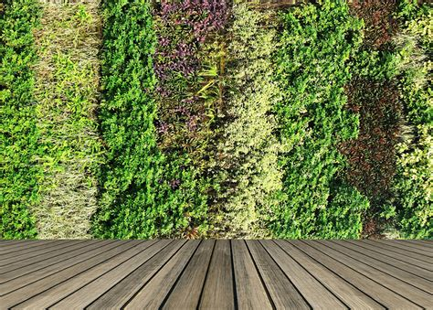 green wall green walls and roofs course careerline courses