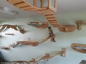 cat wall furniture goldtatze cat furniture that hangs from your walls and