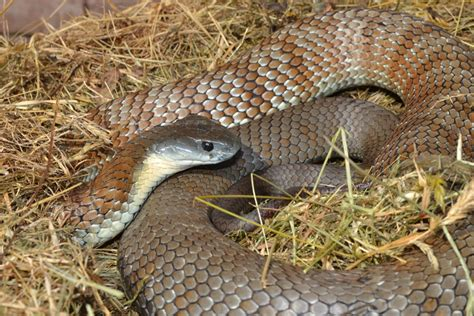 nice  snakes simply living journal
