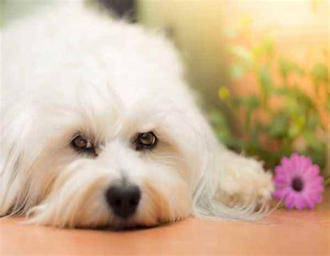 fiori bach cani fiori di bach un aiuto per cani paurosi aggressivi e
