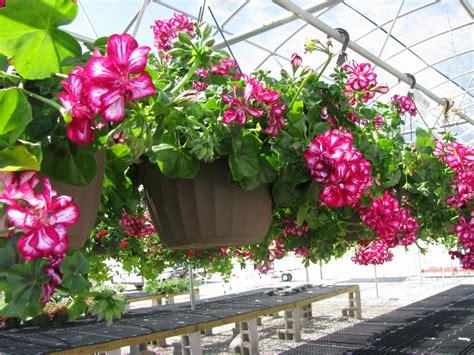 pot bunga susun 4 vertical gantung 10 most beautiful flowers to grow in hanging basket