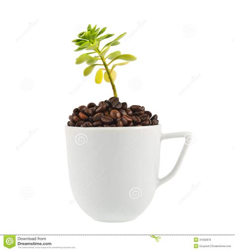 Green Plant Growing From The Cup Royalty Free Stock Images   Image: 31932879