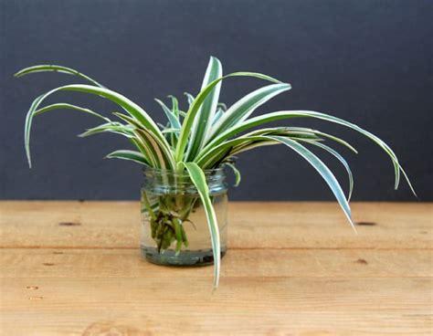 grow beautiful indoor plants  water  piece  rainbow