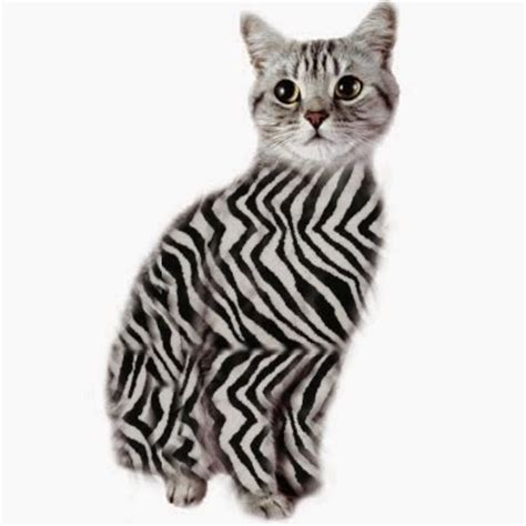 Pashudhan and Animal Science : Zebra colour pattern in ...