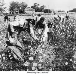 a black s journey from cotton picking to college professor lessons about race class and gender in america black studies and critical thinking books picking cotton stock photos picking cotton stock images