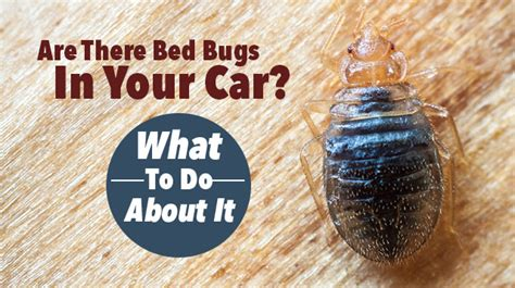 can bed bugs get in your clothes are there bed bugs in your car what to do about it
